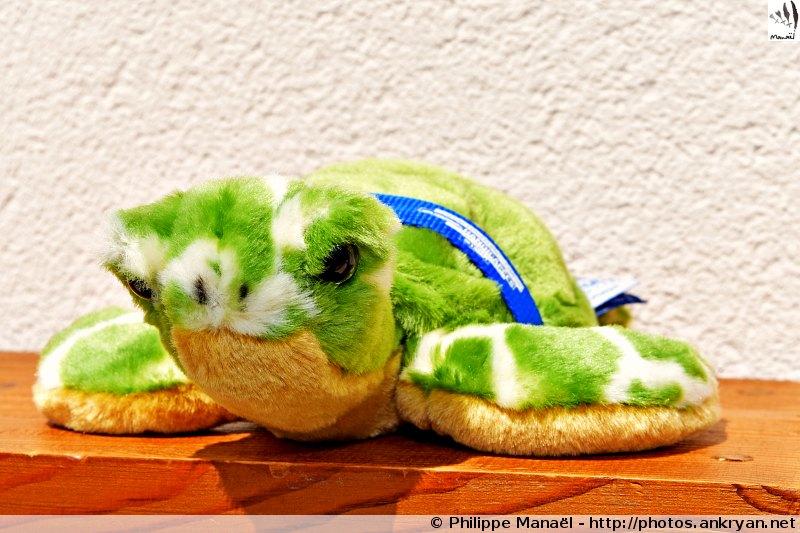 """Peluche tortue verte, Aquarium La Rochelle / Mascotte """"Oeil-vif"""""""