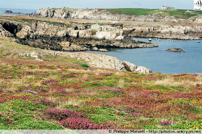 Pointe de Penn ar Ru Meur, île d'Ouessant (Bretagne, Finistère, France)