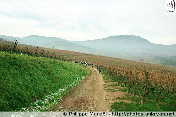Balade autour de Châtenois (trekking Réveillon de l'an : Alsace Médiévale). France, Alsace, Haut-Rhin