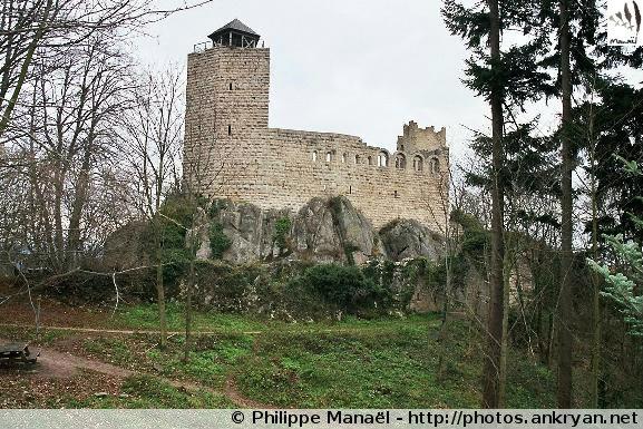 Châtenois -> Château du Bernstein -> Châtenois (trekking Réveillon de l'an : Alsace Médiévale). France, Alsace, Haut-Rhin