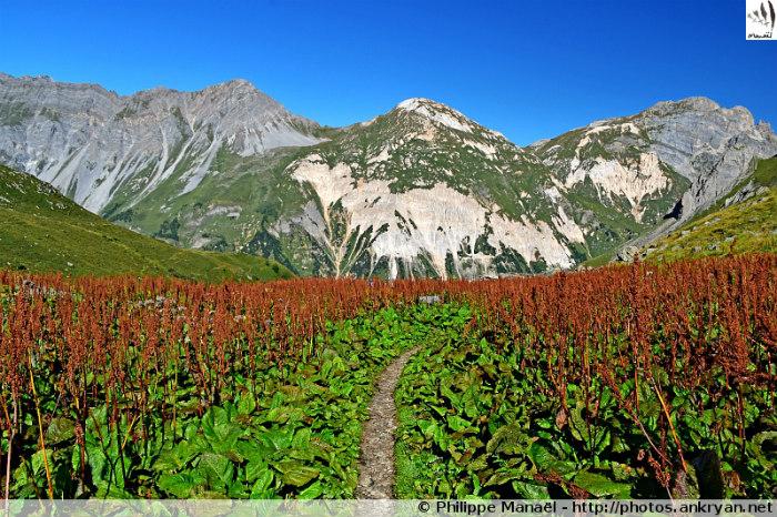 Petit Mont-Blanc, chalet des Nants, Pralognan-la-Vanoise (Savoie, France)