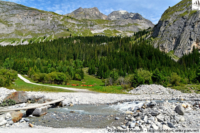 Nant de la Crépéna, bois de la Glière (Pralognan-la-Vanoise, Savoie, France)