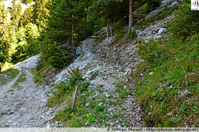 Éboulis piste forestière, Forêt Noire de Champagny-en-Vanoise (Savoie, France)