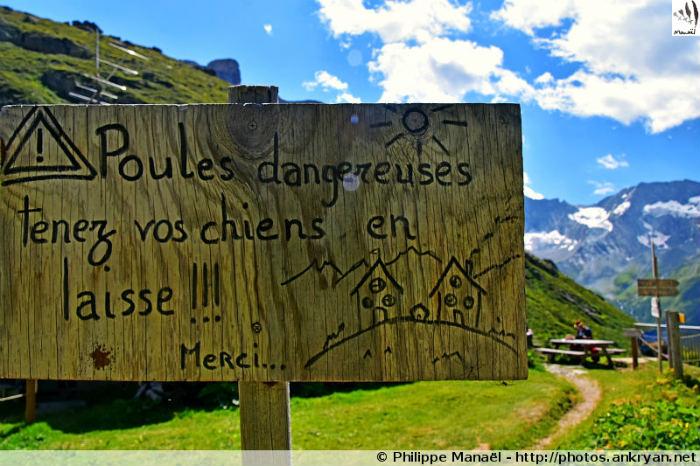 Refuge de Plaisance, poules dangereuses ! Champagny-en-Vanoise (Savoie, France)