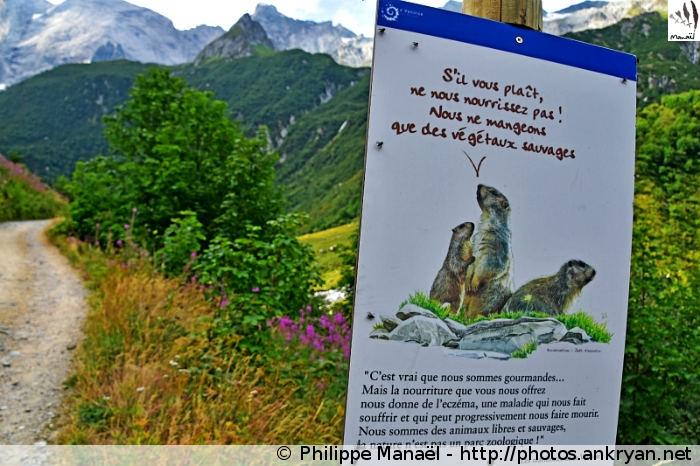 Pancarte sur les marmottes, vallée de Champagny-le-haut (Vanoise, Savoie, France)