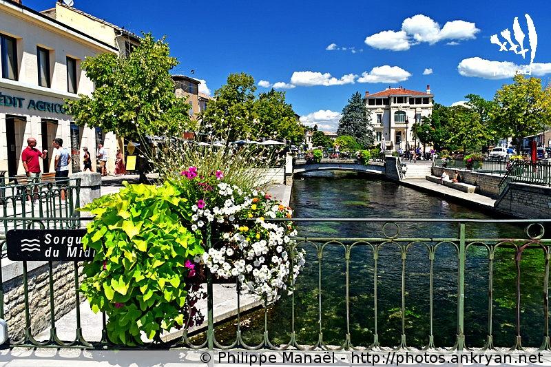 Sorgue du Midi, L'Isle-sur-la-Sorgue (Provence, Vaucluse, France)