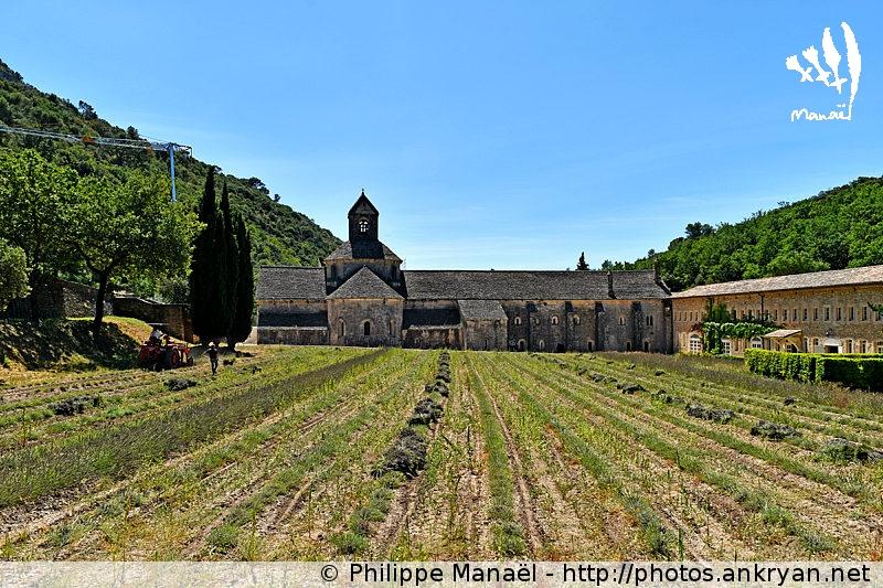Abbaye de Sénanque, Gordes (Provence, Vaucluse, France)