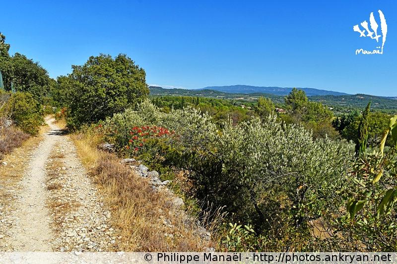 Sentier GR6 de Gordes à Joucas (Provence-Vaucluse, France)