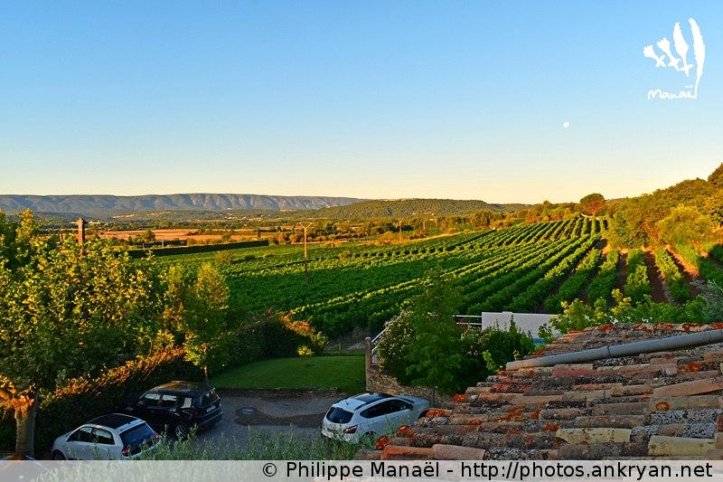 Soleil levant sur les vignes et le Luberon, Joucas (Provence, Vaucluse, France)