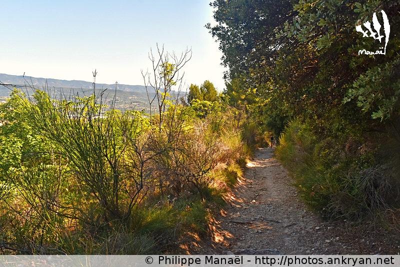 Colline de Pérreal, Gargas dans le Luberon (Provence, Vaucluse, France)