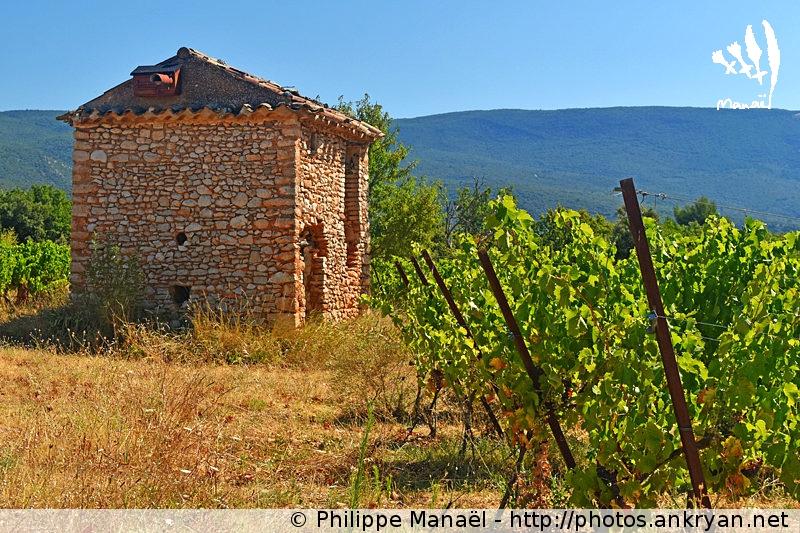 Cabanon dans les vignes à Villars, Luberon (Provence, Vaucluse, France)