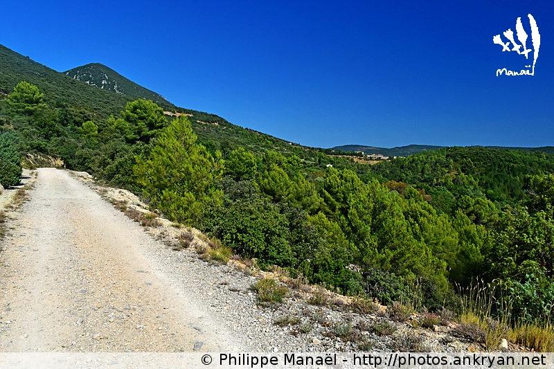 Chemin de l'Olivier pour Rustrel, Luberon (Provence, Vaucluse, France)