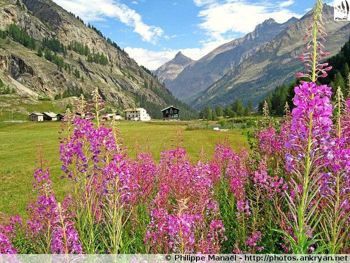 Vallée Valsavarenche (Vallée d'Aoste, Italie)